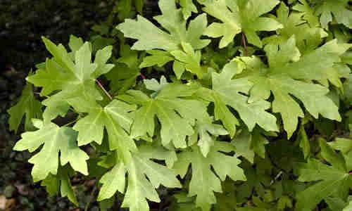 fotos planta Estoraque