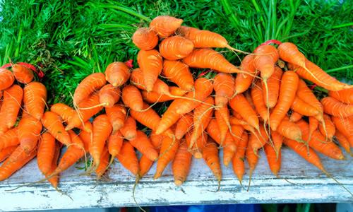 planta zanahorias