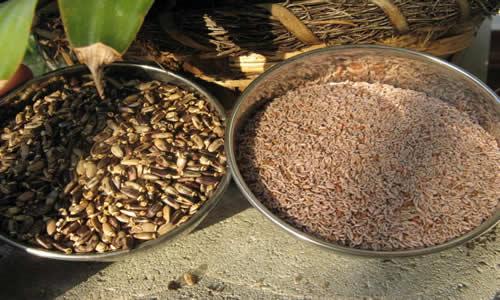 planta Zaragatona
