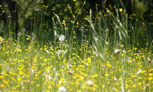 fotos planta primavera