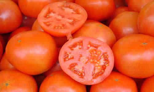planta tomates
