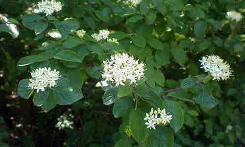 planta Cornejo