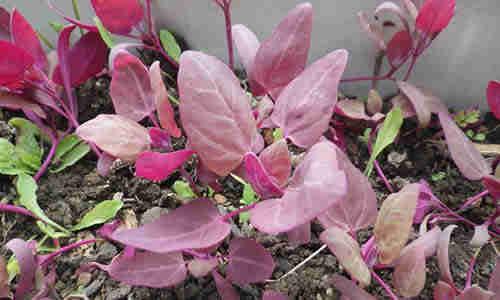 fotos planta armuelle
