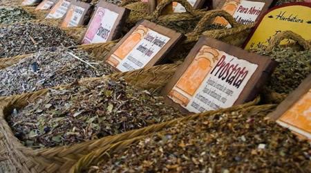 venta de plantas medicinales