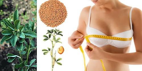 fenogreco plantas medicinales