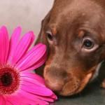 Algunas plantas peligrosas para mascotas