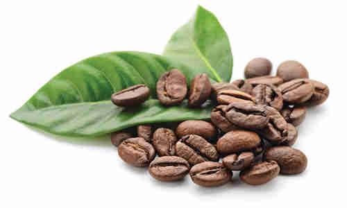 fotos granos cafe