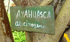 Planta Ayahuasca y sus Caracteristicas