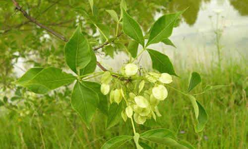 foto planta angostura