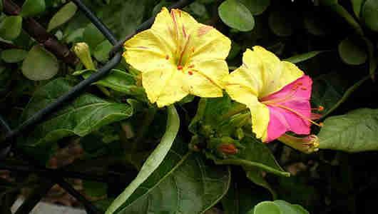 fotos flores jalapa