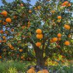 Descubre los poderes medicinales de la naranja