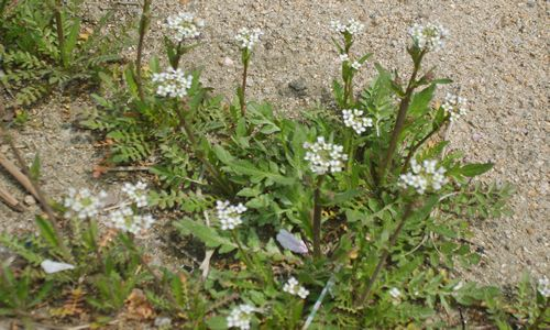 fotos planta Zurron
