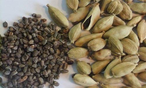 fotos semillas Cardamomo