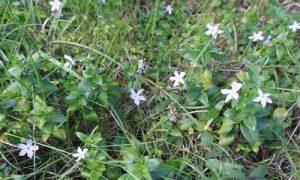 fotos planta Alcandorea