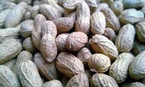 Cacahuete y sus propiedades medicinales
