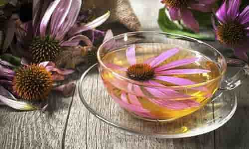 fotos Equinacea planta remedios
