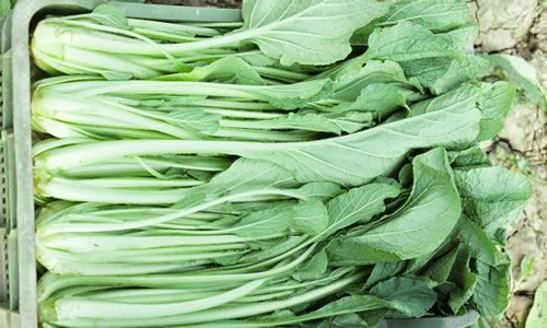 foto planta Borraja alimento