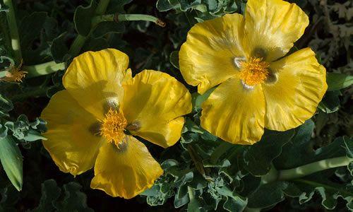 fotos Glaucio planta