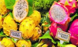 fotos fruto Pitahaya