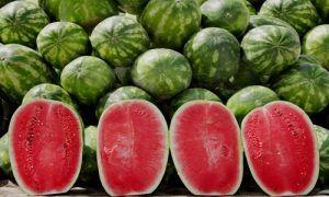 fotos planta sandia fruto