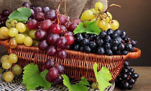 fotos uvas frutos